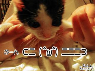 ぶーん⊂二( ^ω^)二二二⊃